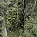 01-wald-31-07-18 PNG