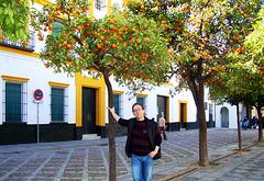 ES - Sevilla - Im Februar unter Orangenbäumen