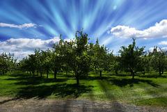 pommes018