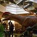 DSCN2752 - Dilophosaurus wetherlli, Theropoda