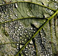 Rain Wet Leaf