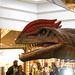 DSCN2754 - Dilophosaurus wetherlli, Theropoda