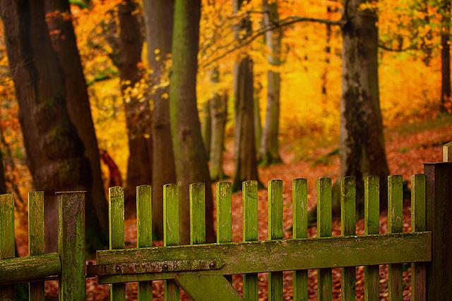 ... und hinterm Zaun der Wald