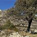 Oak, granite, Monastery and El Cancho Largo