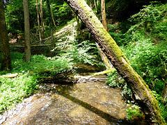 DE - Oppenhausen - Ehrbachklamm Trail