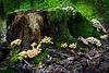 Im Reich der Pilze - Kingdom of mushrooms