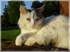 Le chat-telain