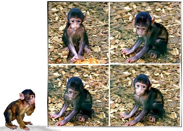 Affenbabies... Monkey babies... ©UdoSm