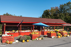 Before, the fruit and vegetable and flower farm Market