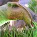 DSCN2760 - Maiasaura peeblesorum, Hadrosauridae Ornithopoda