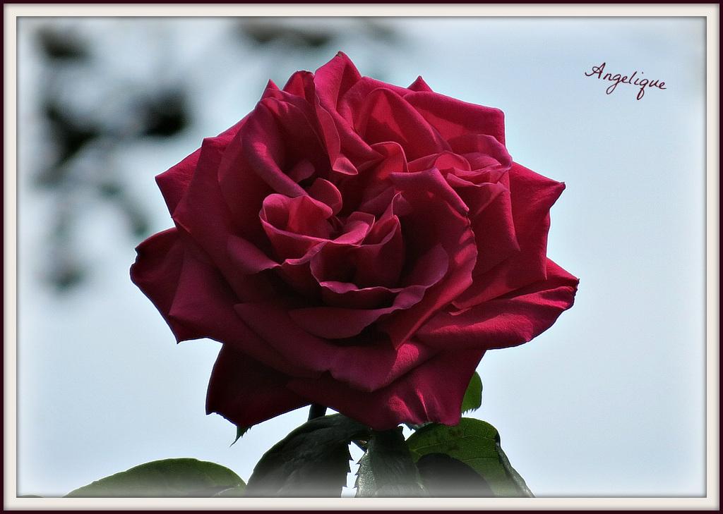 Le temps aux plus belles choses se plait à faire un affront, et saura faner vos roses comme il a ridé mon front