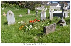 Flowers in Saint Leonard's churchyard - Seaford - June 2021