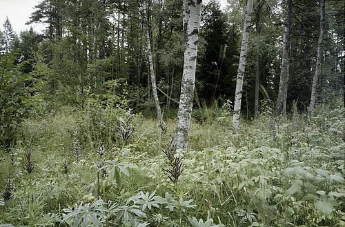 Waldstück in 6x9 Farbe // 06-wald-01-08-18 PNG