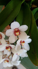 closer view of orchids