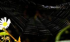 ......das Kunstwerk der Natur leuchtet schön raus.....