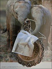The 50 Images Project -15/50 - elephant tea