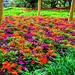 Flower Garden Festival 1 Topaz Filter Impressionistic