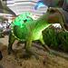 DSCN2769 - Maiasaura peeblesorum, Hadrosauridae Ornithopoda