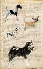 asemic writing dogs me