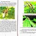 O.A. Fischer - Kun fotilo inter libeloj - specimeno (2 paĝoj)