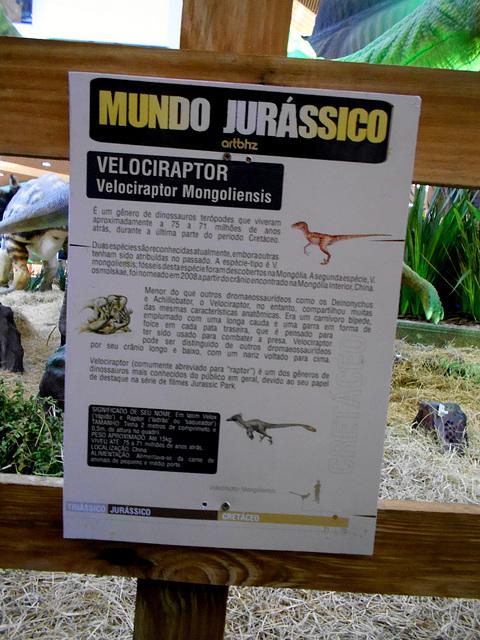 DSCN2770 - Velociraptor mongoliensis, Dromaeosauridae Theropoda
