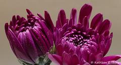Flower 013 081017