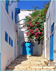 Tunisi : Sidi Bu Said 3