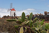 Windmühle zwischen Kakteen - Windmill between cacti