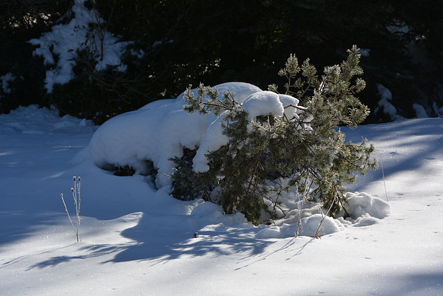 neige mais bien saturée