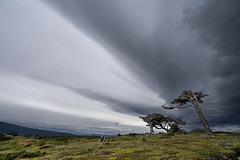 tree's_perspective