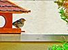 Bergfink am Futterhäuschen. ©UdoSm