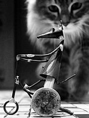 le chat qui venait du ...