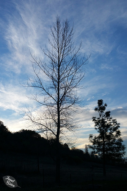 sunrise-tree-silhouette-01.15.19