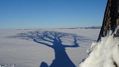 shadows of winter