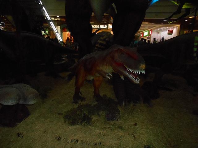 DSCN2784 - Tyrannosaurus rex, Theropoda