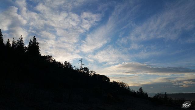 sunrise-tree-silhouettes-01.15.19