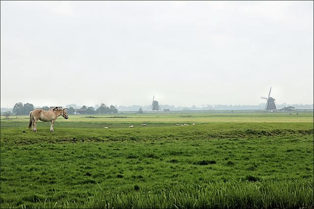 Nieuwkoop (NL) 13 mai 2018.