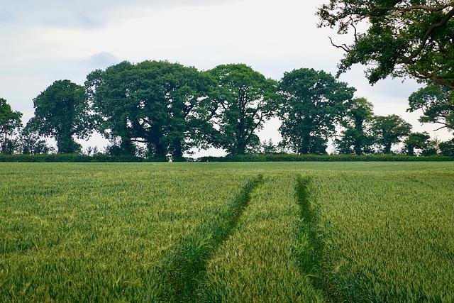 Fields near Newport