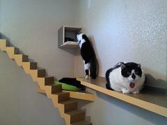 Cat shelter 3