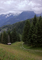 Mountain Pasture / Almwiese