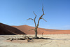 Namibia, Ancient Dried up Tree in Deadvlei