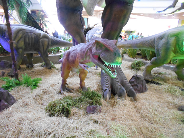 DSCN2789 - Tyrannosaurus rex, Theropoda