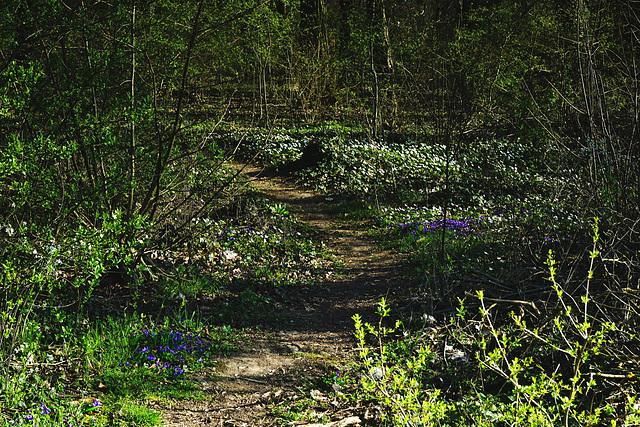 Ein Waldspaziergang - A forest walk
