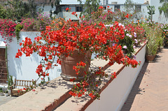 Lima, Flowers in the Garden of Larco Museum