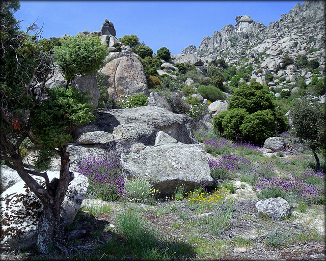Spring wildflowers and granite