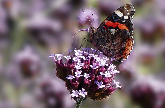 Gierig auf Nektar! - Greedy for nectar! (PiP)