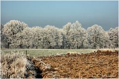 winter scenery....