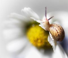 daisy & snail