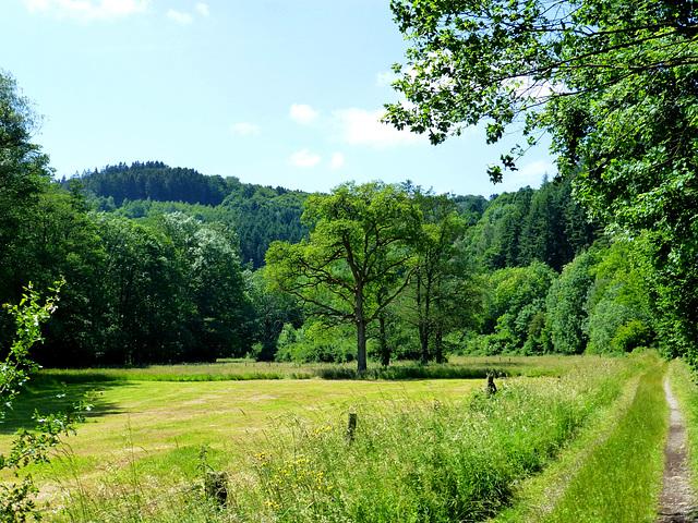 DE - Hürtgenwald - Viertälerweg Trail