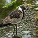 Aviary bird